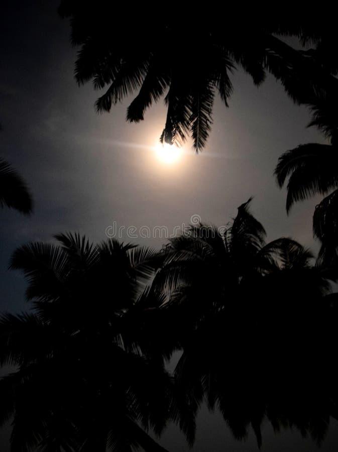月光-棕榈树叶子和银色满月剪影在黑暗的夜空 库存照片