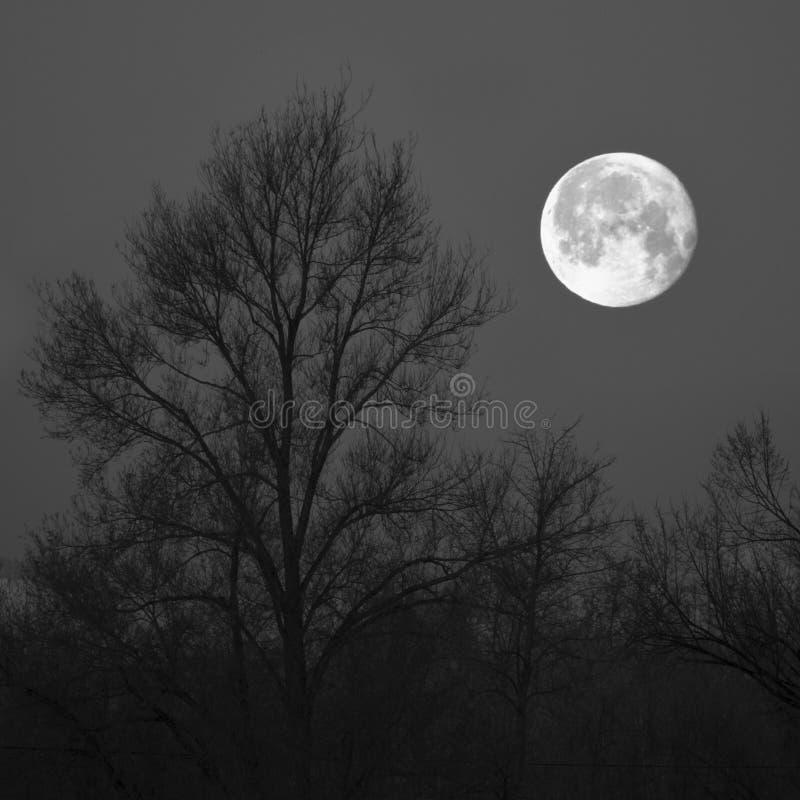 满月和树 免版税库存图片