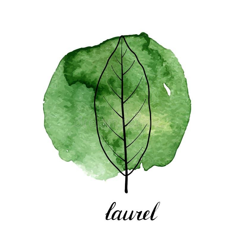 月桂树传染媒介叶子  向量例证