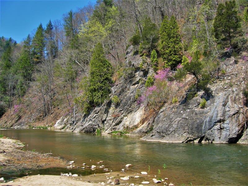 月桂树小河在大马士革弗吉尼亚 免版税库存照片