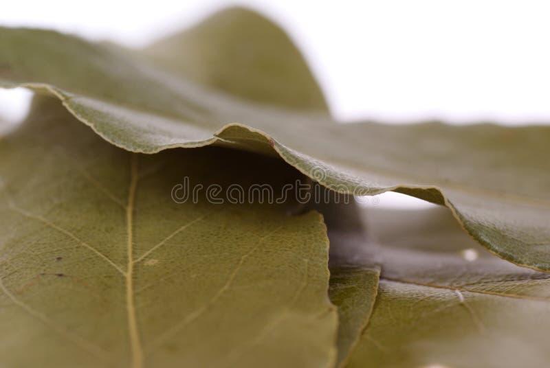 月桂树花圈 库存照片