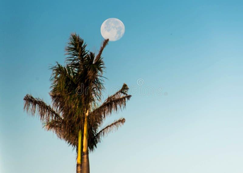 满月棕榈树蓝天 库存图片