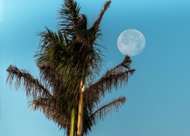 满月棕榈树蓝天 免版税库存图片