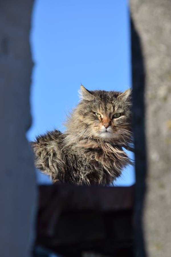 3月猫 库存照片