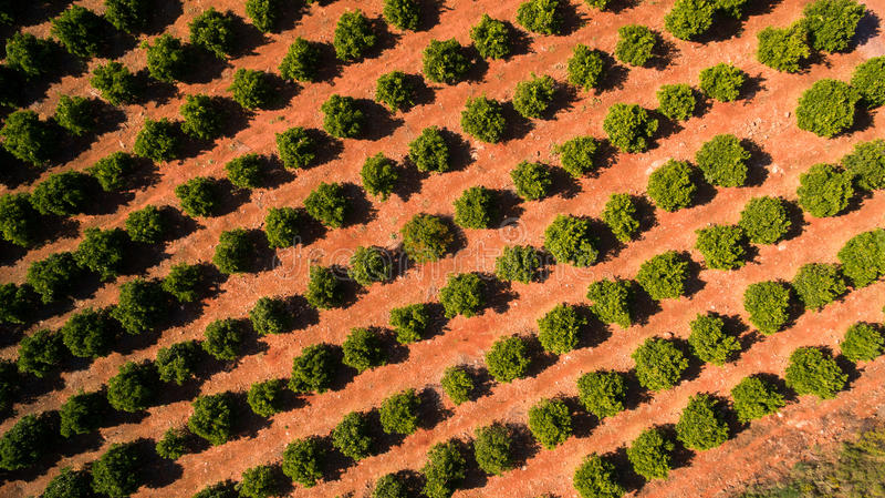5月的橙树种植园在葡萄牙,阿尔加威,鸟瞰图 库存图片
