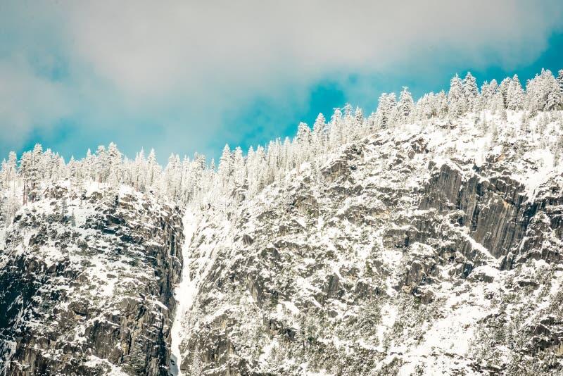 2月雪瀑布和杉木 免版税库存图片
