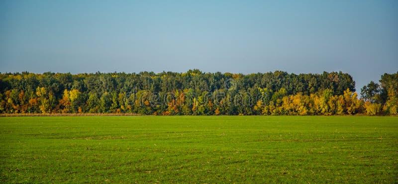 10月,秋天在森林里从金黄,黄色,橙色和绿色树的领域的美丽的景色 免版税图库摄影