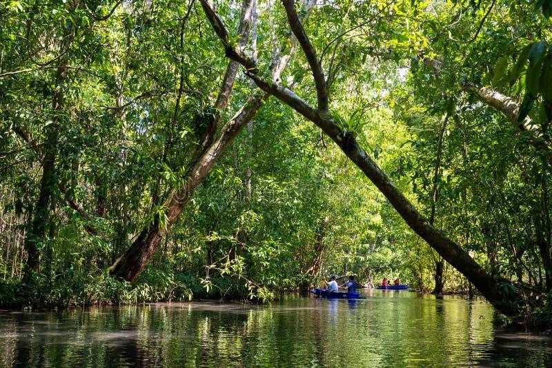 12月22日2018泰国:旅行美洲红树森林乘划艇 免版税图库摄影