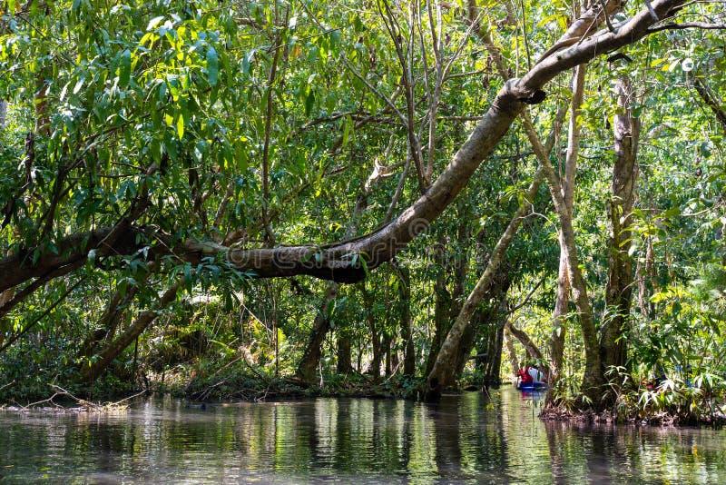 12月22日2018泰国:旅行美洲红树森林乘划艇 免版税库存照片