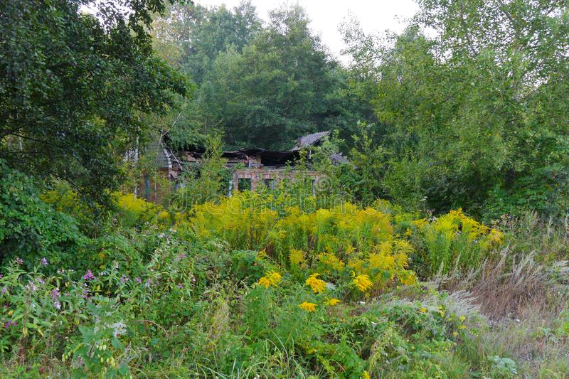 有一个下落的屋顶的一个被放弃的房子从站立在灌木和树厚实的丛林的板岩和残破的玻璃  免版税库存照片