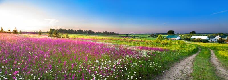 有一个开花的草甸的夏天农村风景全景 免版税库存图片