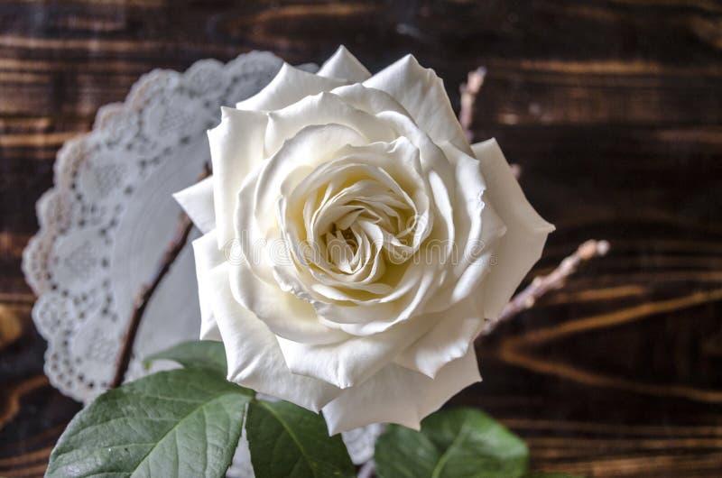有一个的被烧焦的委员会透露了白色玫瑰 免版税库存图片