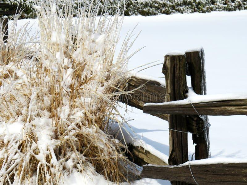 有一些叶子的木篱芭被盖冰和雪 库存照片