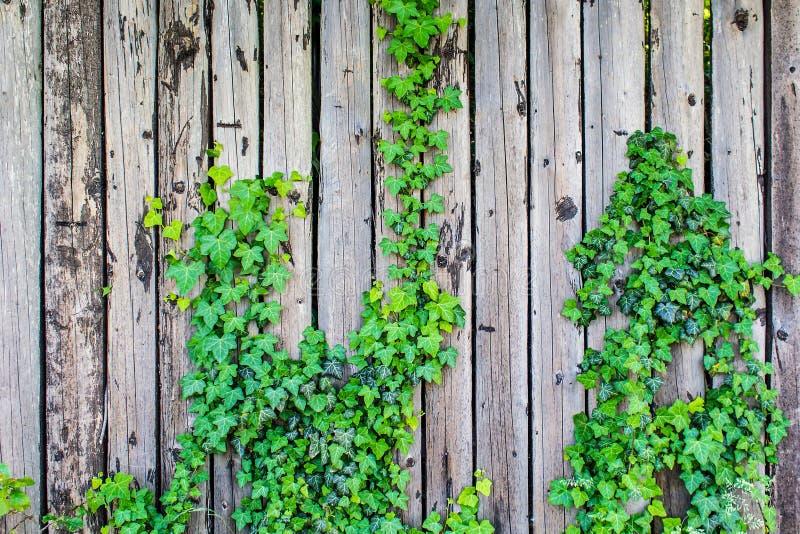 有一些自然的板条篱芭 免版税图库摄影
