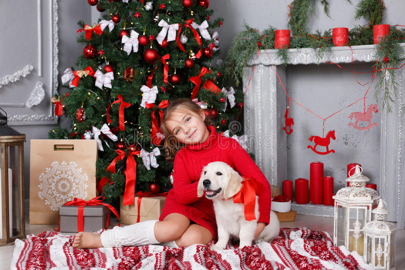 有一只小狗金毛猎犬的一个小女孩在圣诞树背景  免版税库存照片