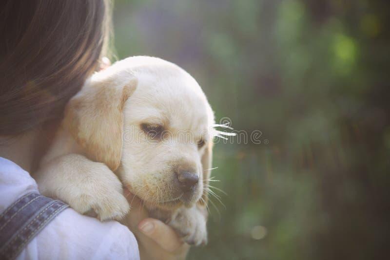 有一只金毛猎犬小狗的小女孩 免版税库存图片