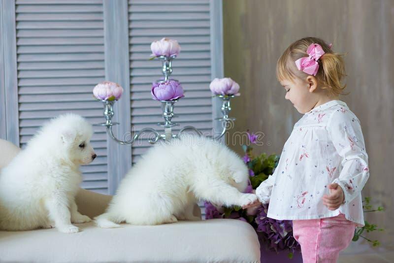 有一只samed狗小狗的女孩享受一起摆在演播室射击的时间穿嫩颜色礼服 库存图片