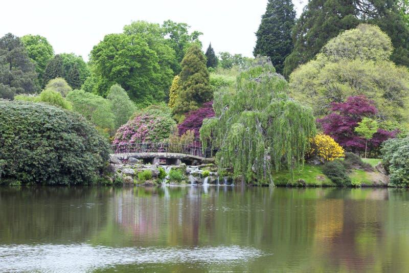 有一座桥梁的环境美化的成熟英国庭院在湖 免版税库存照片