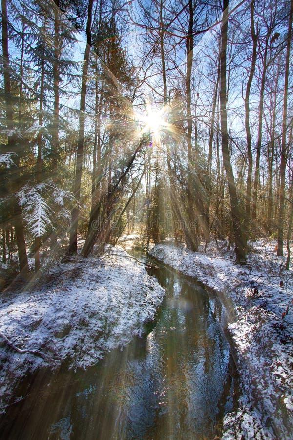 有一条小小河的森林在冬天 库存照片