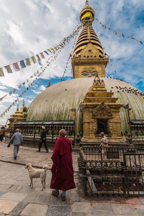 有一条狗的修士在猴子寺庙前面 免版税库存照片