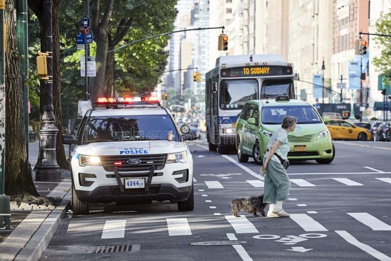 有一条狗的步行者在与NYPD车的斑马线在街道上停放了由中央公园 免版税库存图片