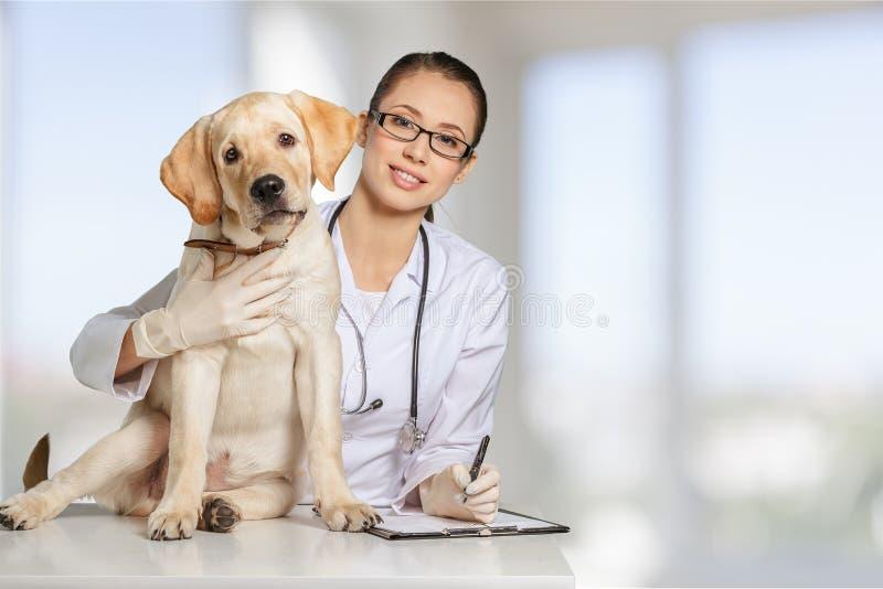 有一条狗的美丽的年轻兽医在白色 库存图片