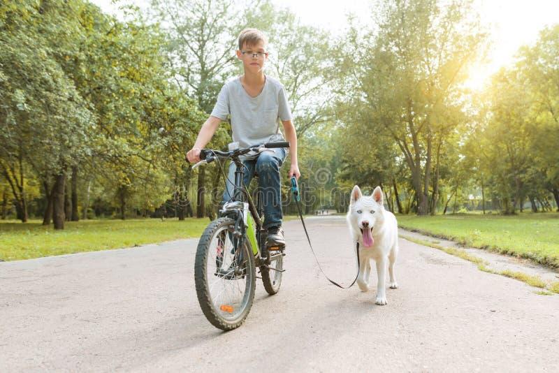 有一条白色多壳的狗的男孩在自行车在公园 免版税图库摄影