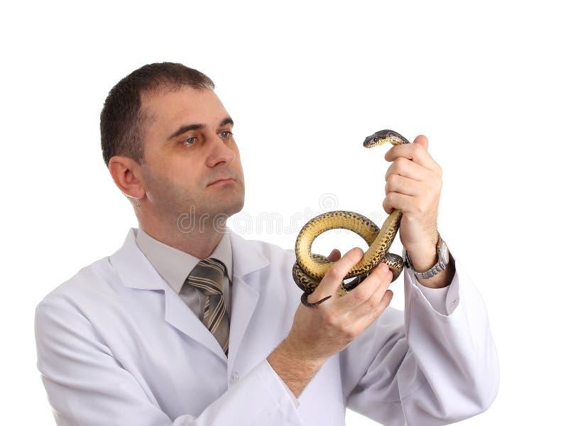 有一条蛇的兽医在他的手上 免版税库存图片
