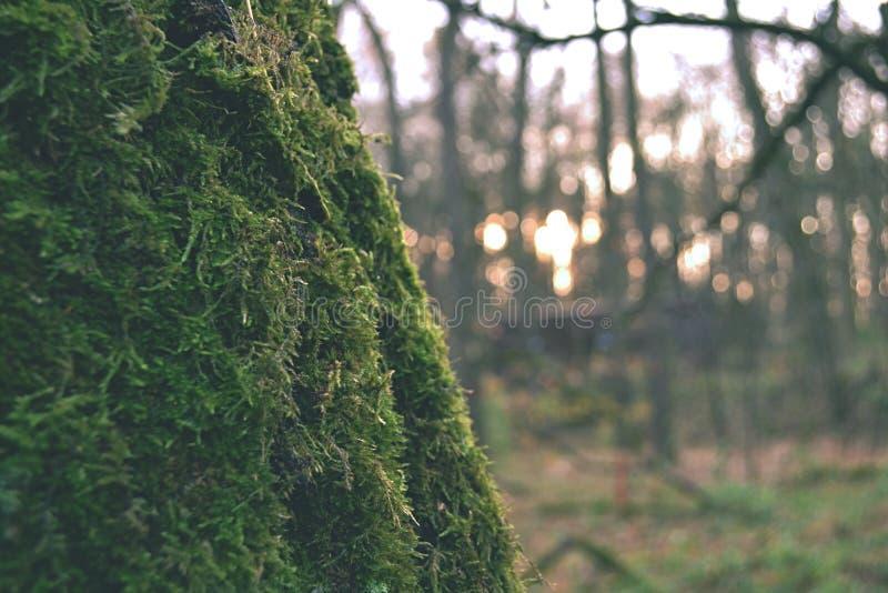 有一根青苔隐蔽的树干的一个不可思议的秋天森林在前景 图库摄影