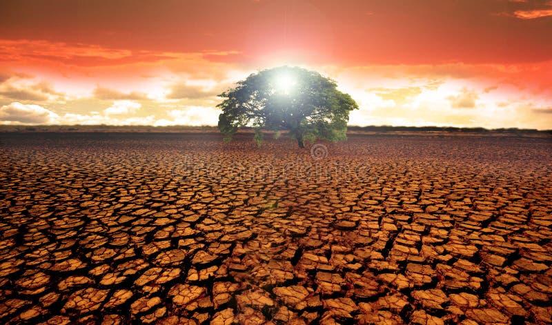 有一棵唯一绿色树的贫瘠沙漠土地 免版税图库摄影