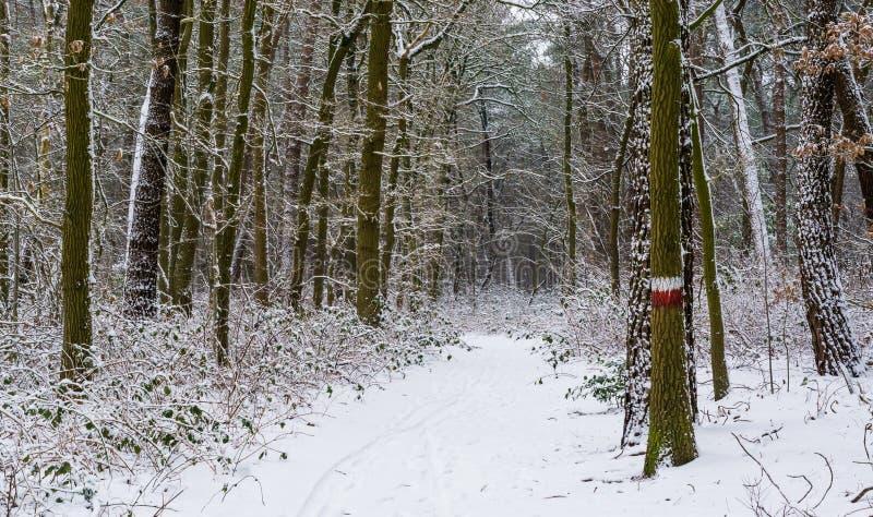 有一棵明显的树和许多的美丽的白色多雪的森林公路植物,在雪充分地盖的人行道,在a的冬天季节 库存图片