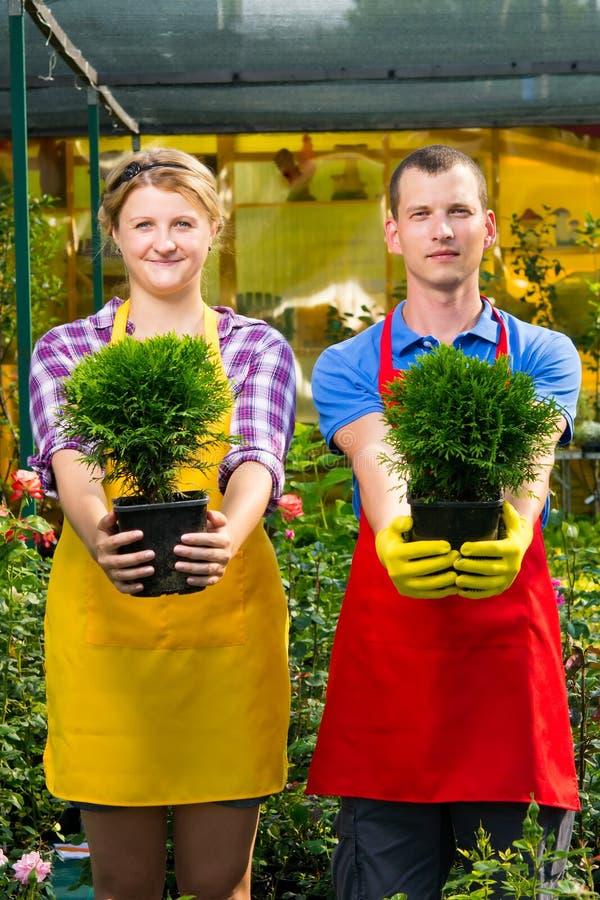 有一棵绿色树的两个罐在工作者的手上 免版税库存照片