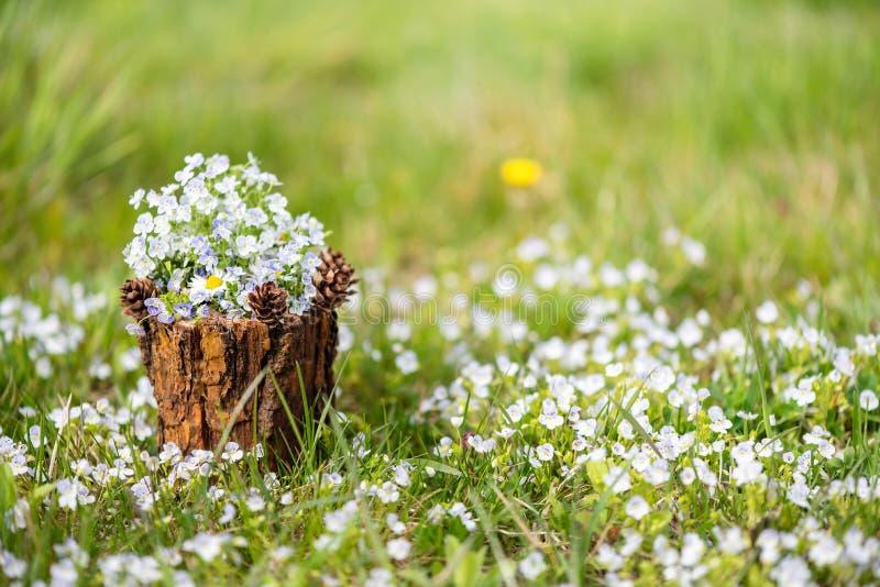 有一花束的装饰花瓶在庭院里 Veronica chamaedrys? 免版税图库摄影
