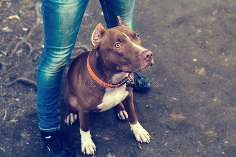 有一起使用狗的自然的妇女 免版税库存图片