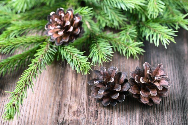 Download 有三个锥体的杉树枝杈 库存照片. 图片 包括有 符号, 杉木, 冷杉, 结构树, browne, 枝杈, 圣诞节 - 62530790