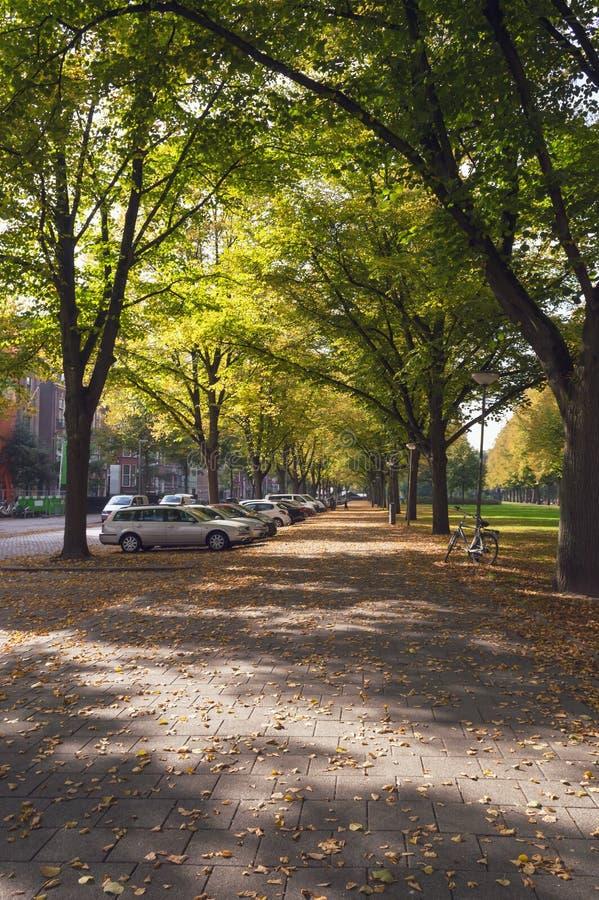 有下落的秋叶的胡同 库存照片