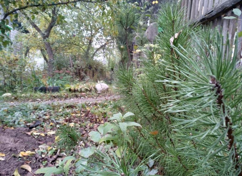 有下落的黄绿叶子的秋天森林在绿草和树 俄罗斯的自然本底 库存图片