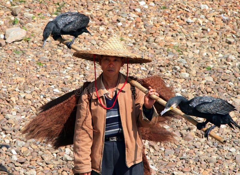 有两鸬鹚的中国渔夫在他的肩膀,广西省 库存照片