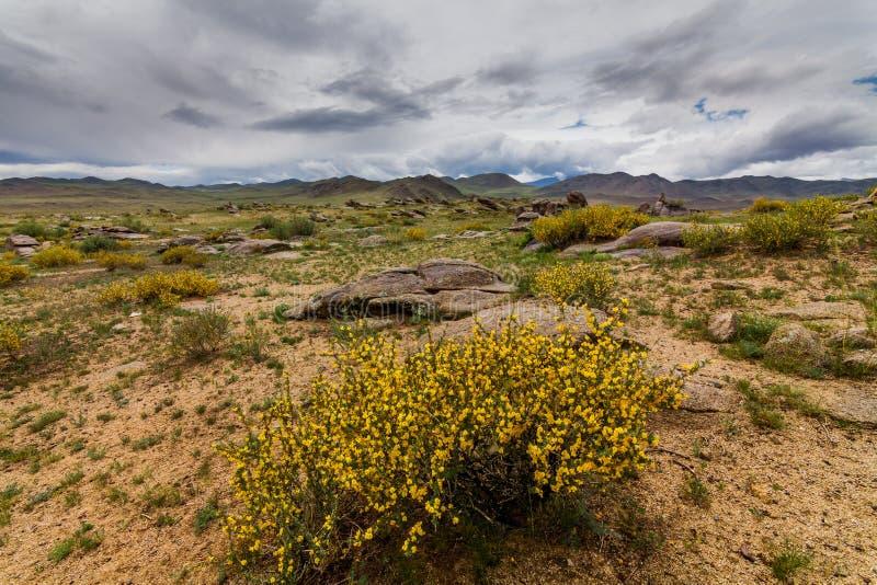 有云彩的开花的沙漠 亚利桑那,美国, 免版税库存照片