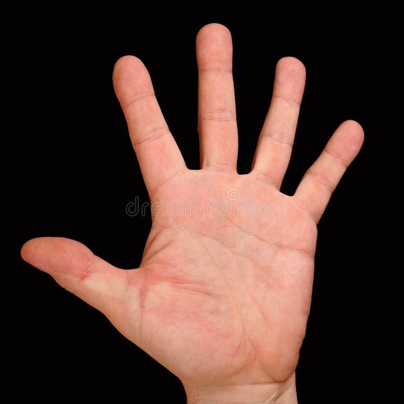 有五个手指的棕榈 免版税图库摄影