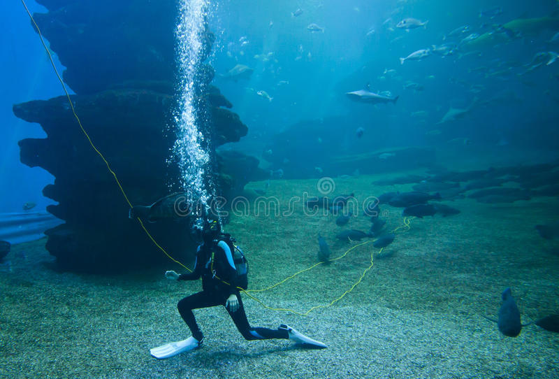 有五颜六色的异乎寻常的热带鱼和鲨鱼的潜水者水下在水族馆 免版税库存照片