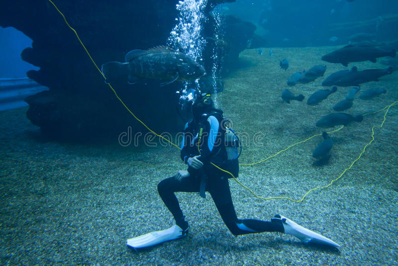 有五颜六色的异乎寻常的热带鱼和鲨鱼的潜水者水下在水族馆 库存图片