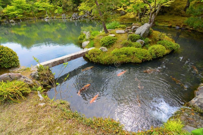 有五颜六色的橙色鲤鱼鱼的传统日本池塘庭院 免版税图库摄影