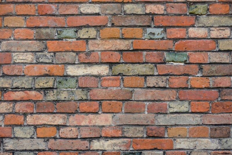 有五颜六色的色的砖的红砖墙壁,红色,绿色,灰色,在夏天变褐在布鲁日,比利时,红色墙壁纹理,作为背景 免版税库存图片
