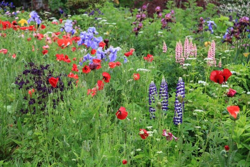 有五颜六色的花的鸦片,虹膜庭院,凶猛和鸽子似 免版税库存照片