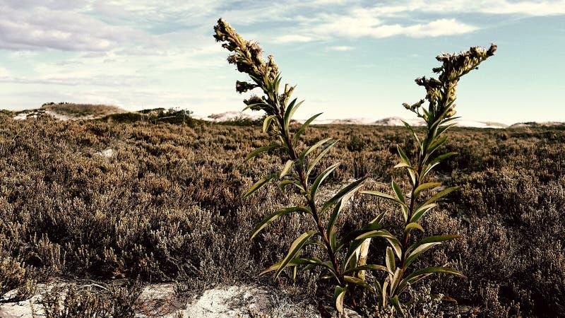 有些杂草和沼泽 免版税库存图片
