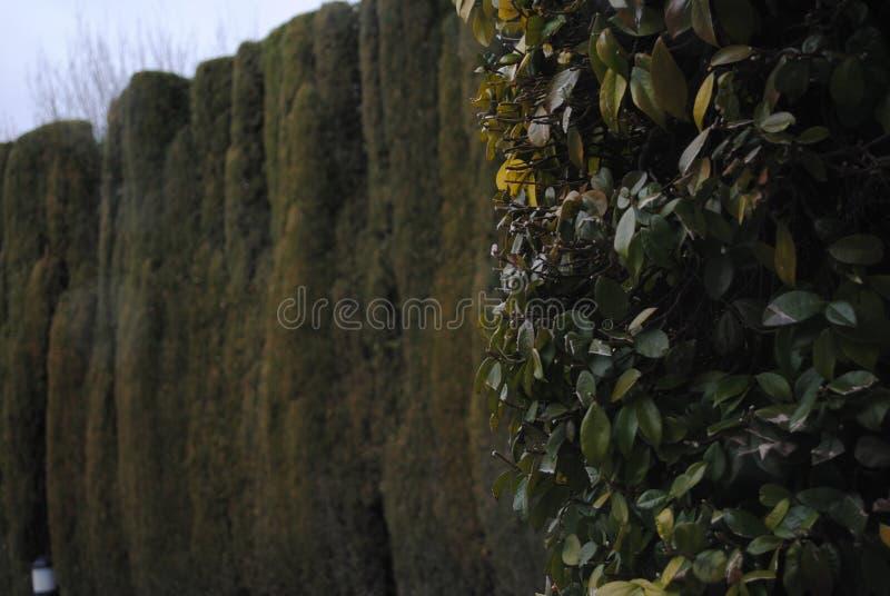 有些植物 图库摄影