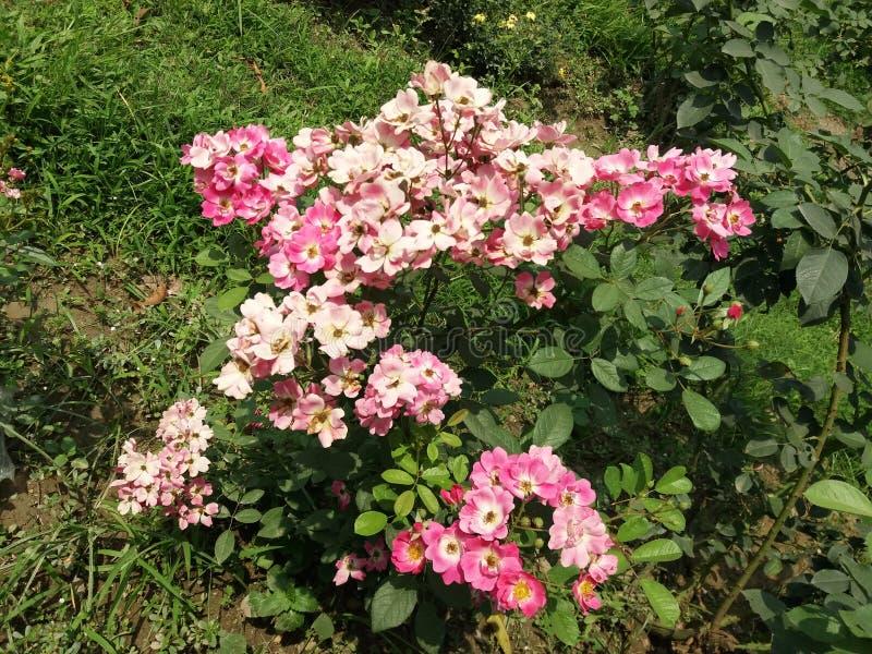有些花在庭院里 库存照片