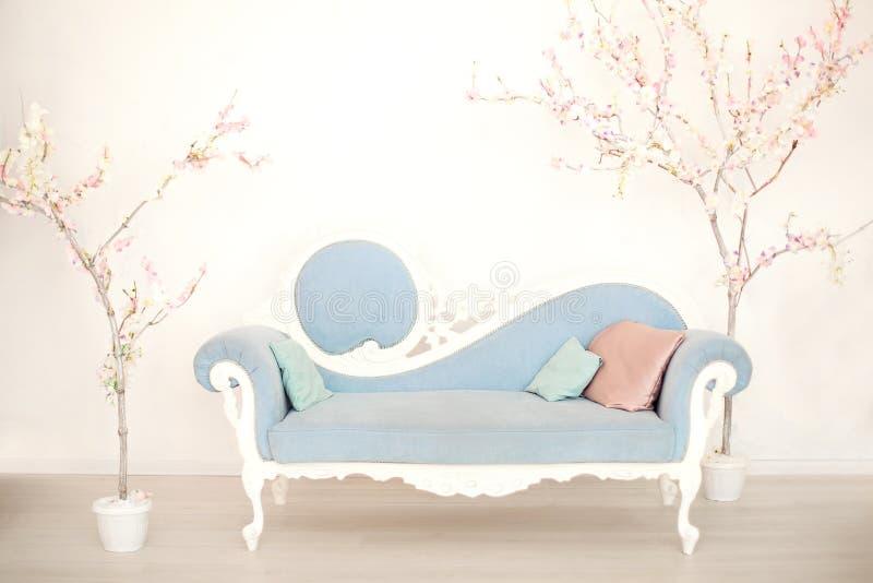 有人为开花的树的一个软的蓝色沙发在一个白色客厅 经典样式沙发在房子里 古色古香的木沙发armc 库存照片