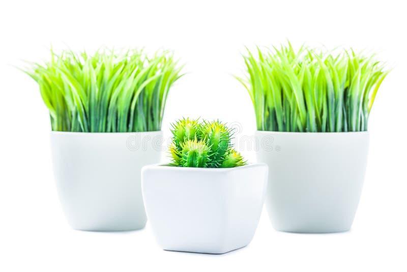 有人为被隔绝的植物塑料植物的三个罐 库存图片